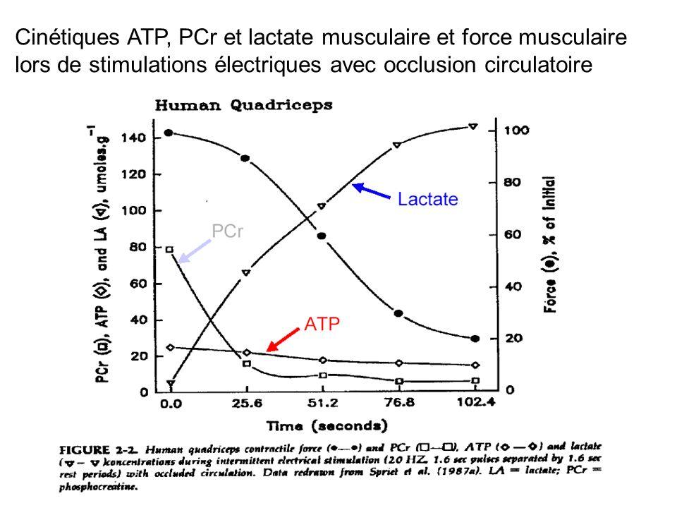 Cinétiques ATP, PCr et lactate musculaire et force musculaire lors de stimulations électriques avec occlusion circulatoire