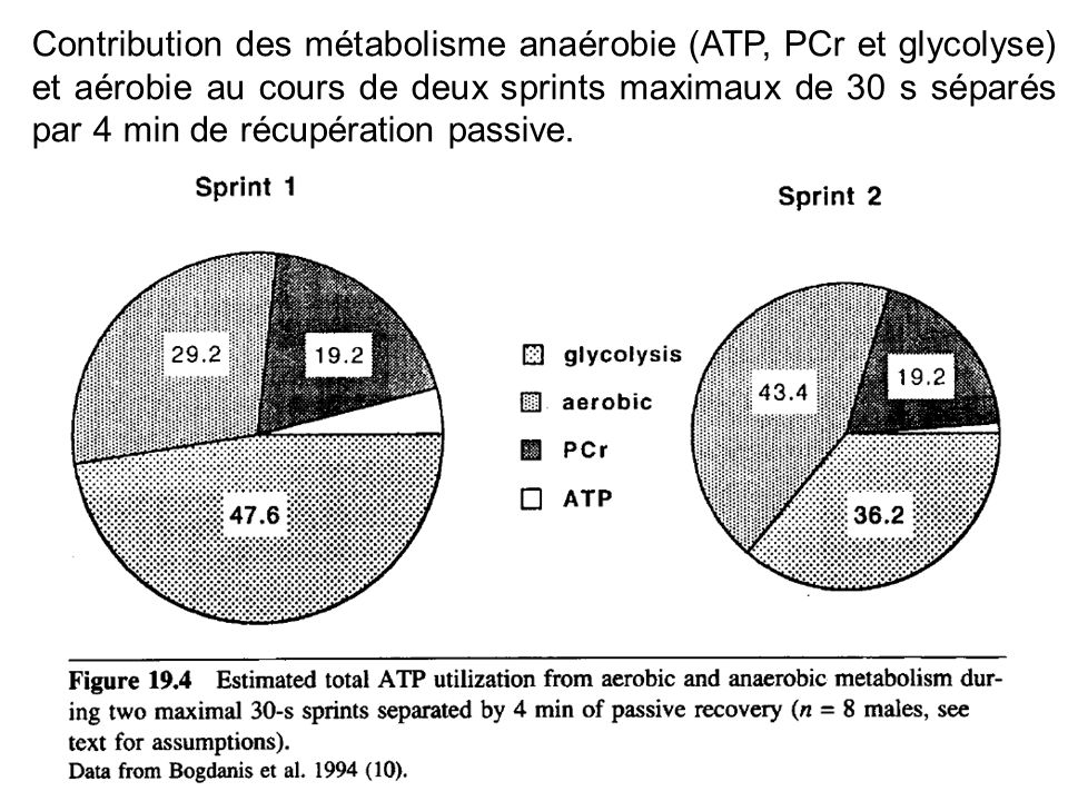 Contribution des métabolisme anaérobie (ATP, PCr et glycolyse) et aérobie au cours de deux sprints maximaux de 30 s séparés par 4 min de récupération passive.