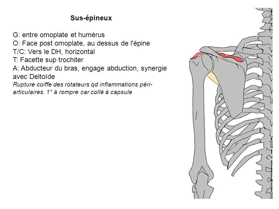 G: entre omoplate et humérus