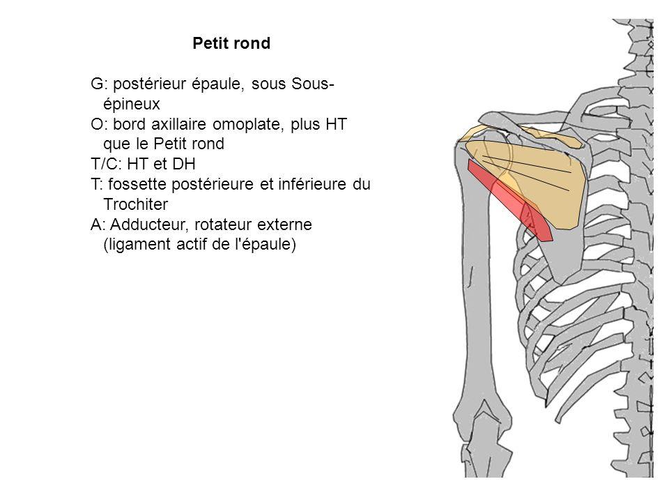 G: postérieur épaule, sous Sous-épineux