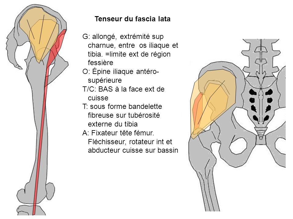 O: Épine iliaque antéro-supérieure T/C: BAS à la face ext de cuisse