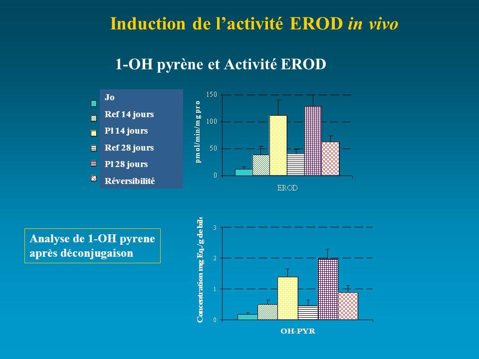 1-OH pyrène et Activité EROD