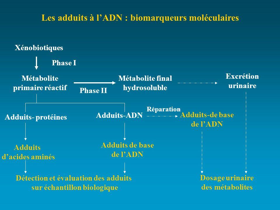 Les adduits à l'ADN : biomarqueurs moléculaires