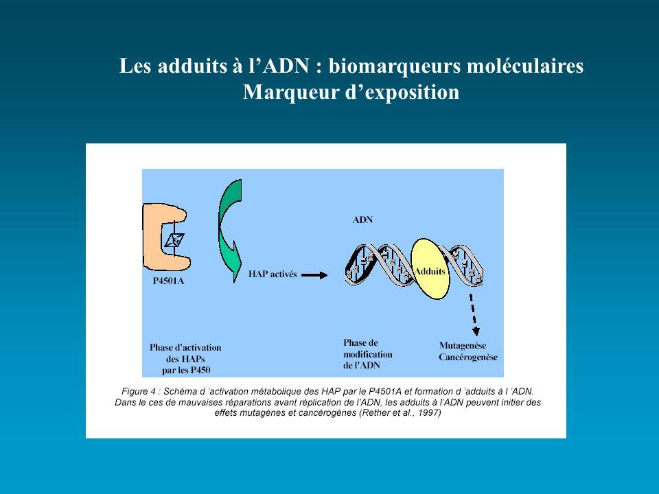 Les adduits à l'ADN : biomarqueurs moléculaires Marqueur d'exposition