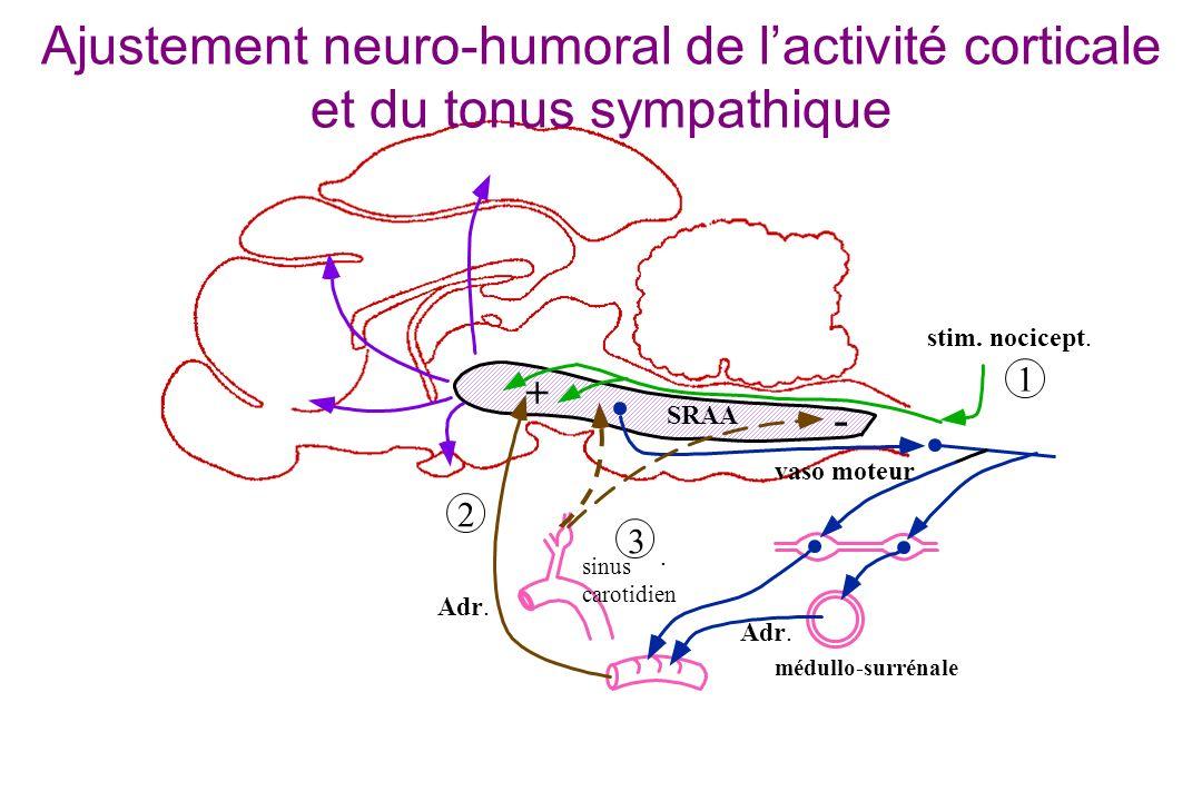 Ajustement neuro-humoral de l'activité corticale et du tonus sympathique