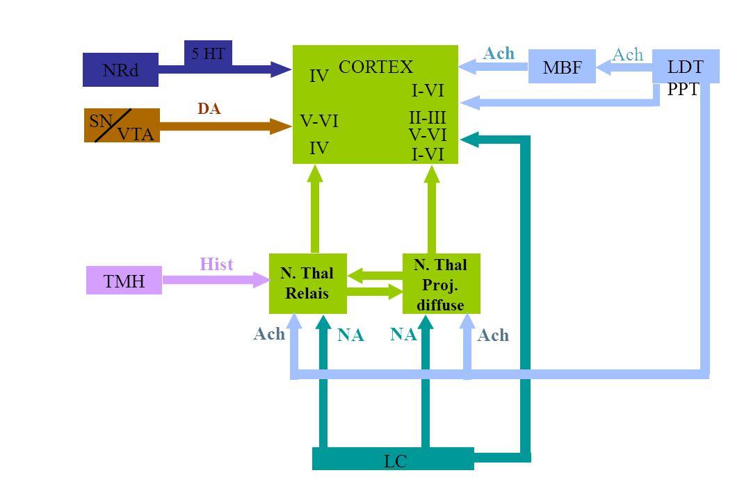 NRd Ach MBF LDT PPT CORTEX IV I-VI SN VTA V-VI II-III V-VI IV LC NA