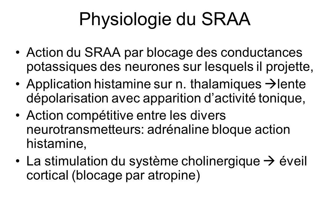 Physiologie du SRAA Action du SRAA par blocage des conductances potassiques des neurones sur lesquels il projette,