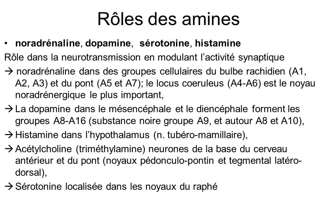 Rôles des amines noradrénaline, dopamine, sérotonine, histamine