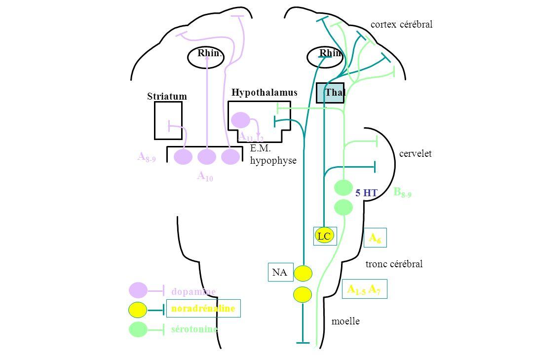 A11-12 A8-9 A10 B8-9 A6 A1-5 A7 noradrénaline NA LC dopamine