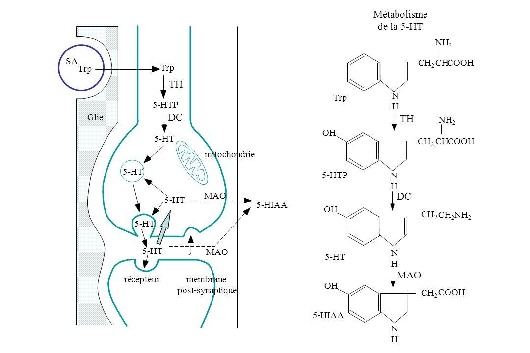Métabolisme de la 5-HT TH DC TH DC MAO NH2 SA CH2 CH COOH Trp Trp Trp