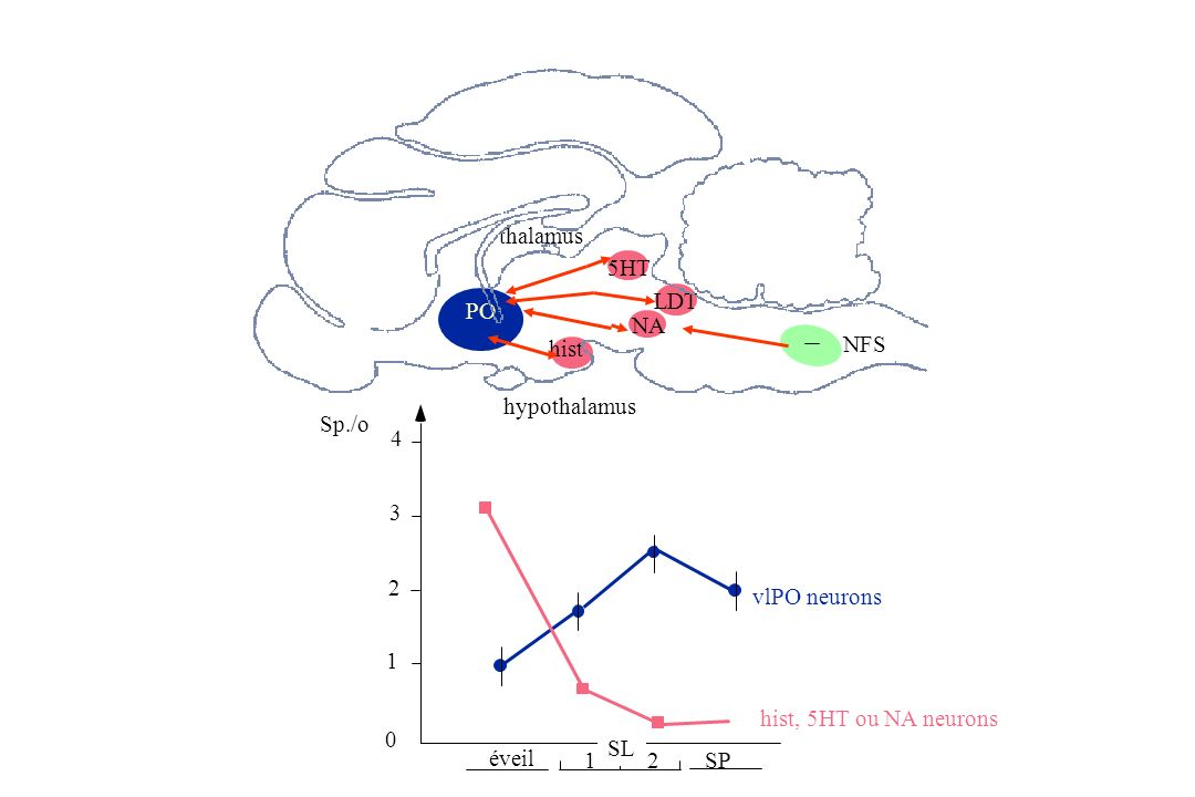 thalamus 5HT. LDT. PO. NA. hist. NFS. hypothalamus. Sp./o. 4. 3. 2. vlPO neurons. 1. hist, 5HT ou NA neurons.