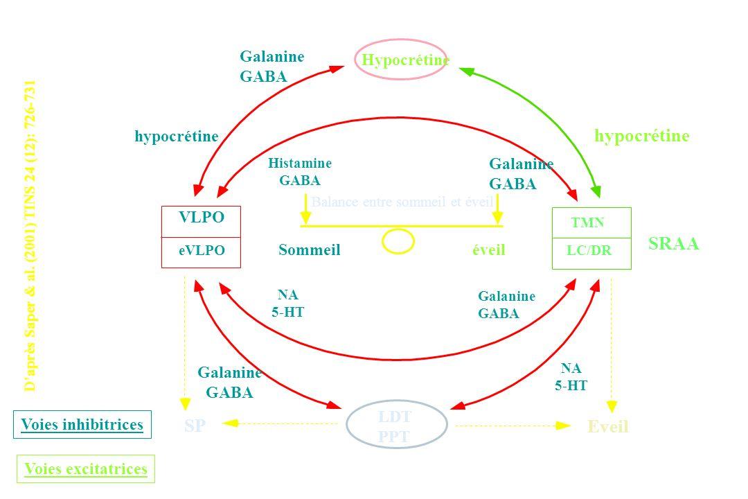 hypocrétine SRAA SP Eveil Galanine GABA Hypocrétine hypocrétine