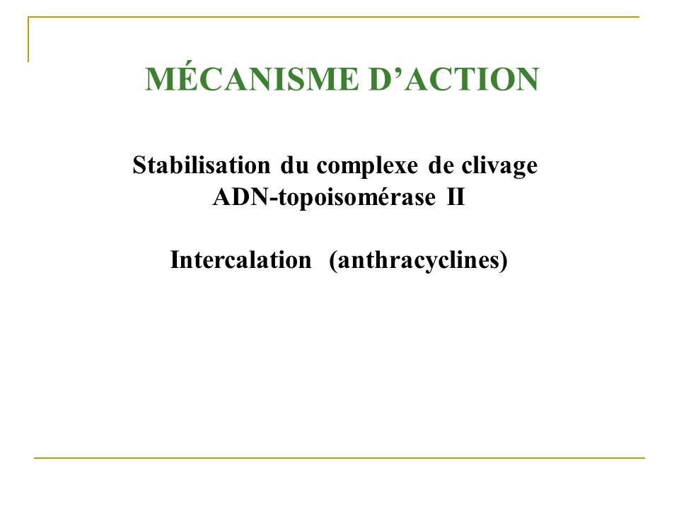 Stabilisation du complexe de clivage Intercalation (anthracyclines)