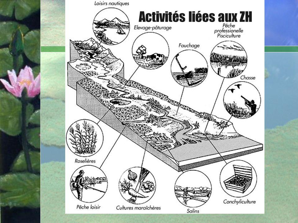 Activités liées aux ZH Bullet Point Slide Marais Agricoles Aménages