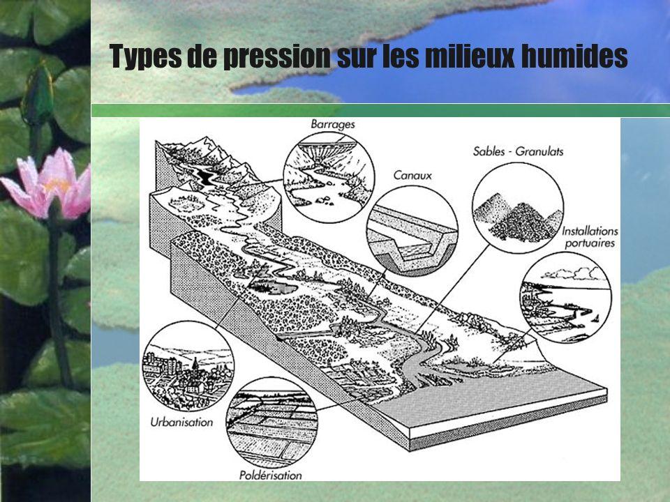 Types de pression sur les milieux humides