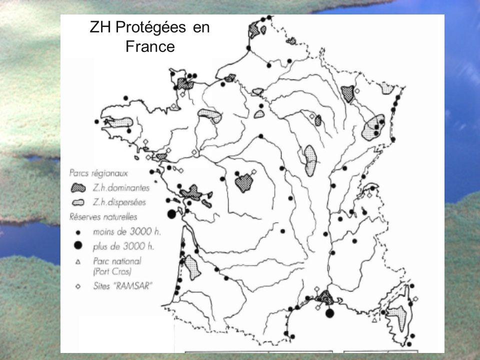 ZH Protégées en France