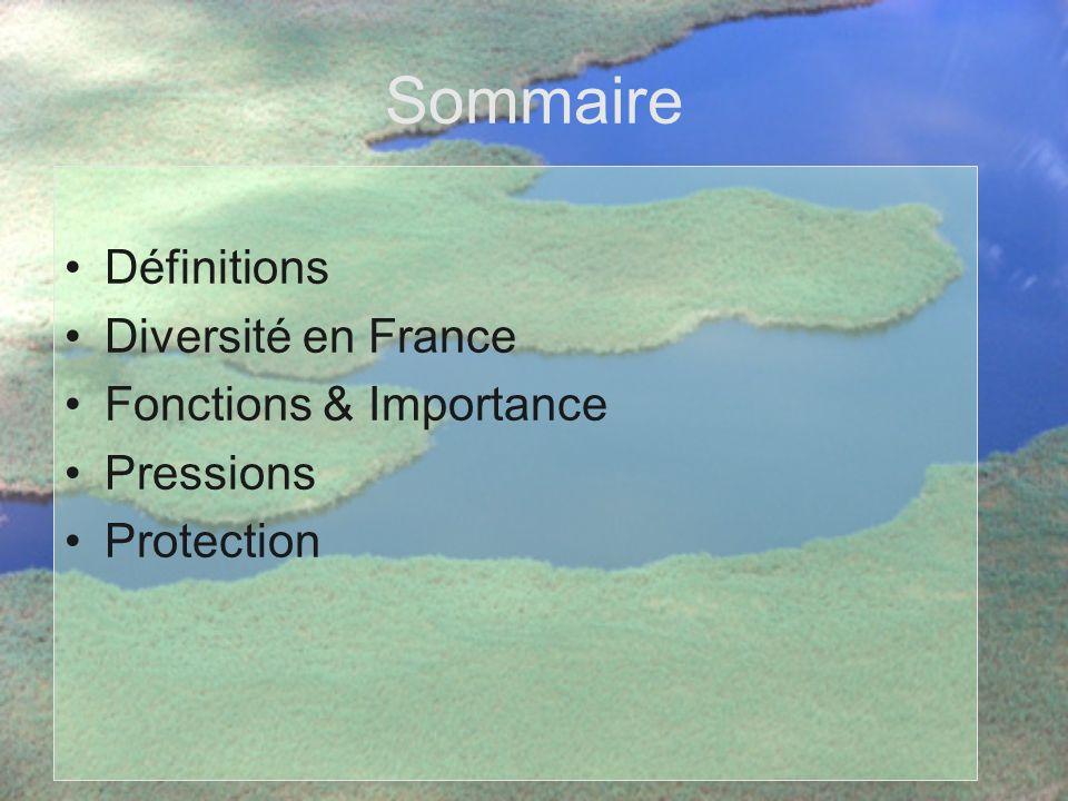 Sommaire Définitions Diversité en France Fonctions & Importance
