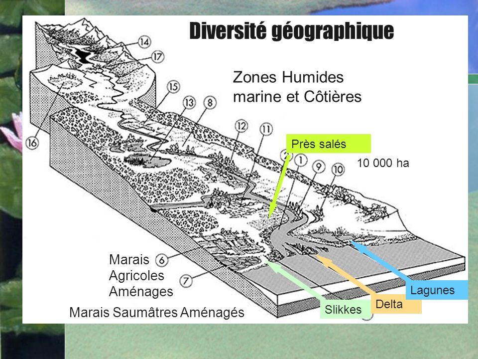 Diversité géographique