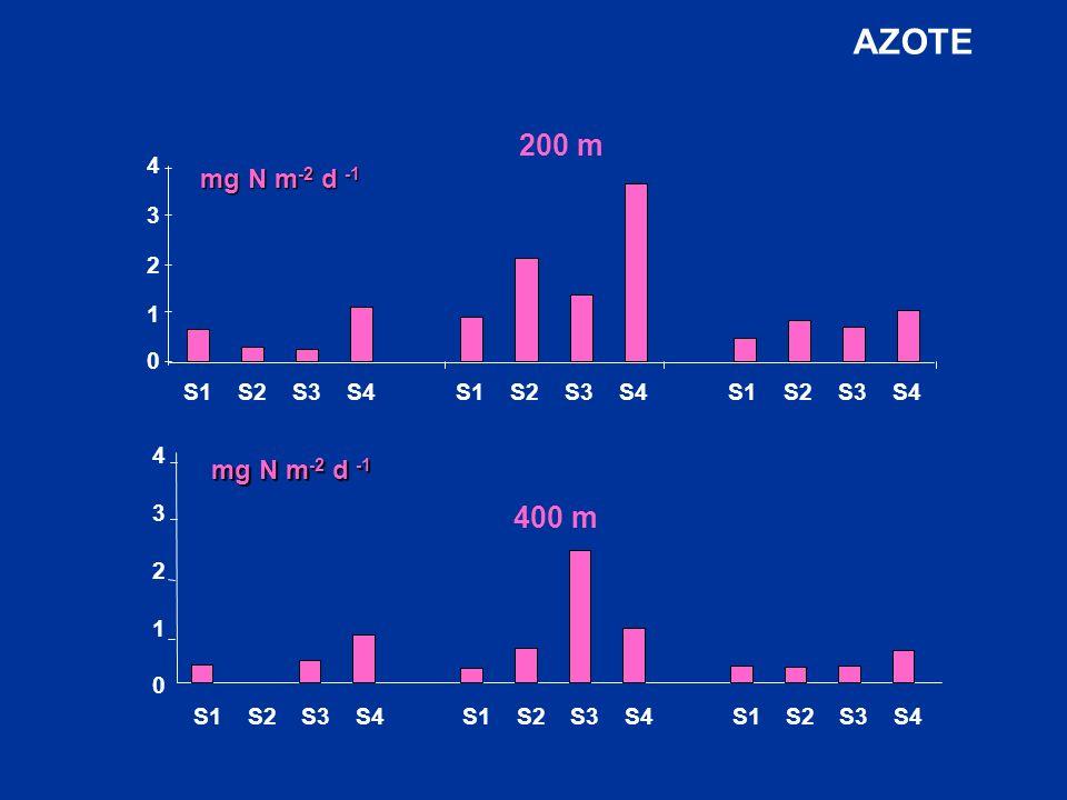AZOTE S1 S2 S3 S4 200 m 1 2 3 4 mg N m-2 d -1 400 m