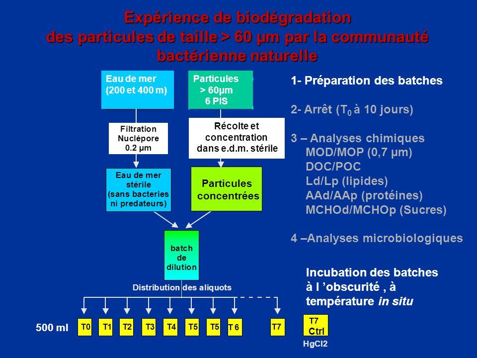 Expérience de biodégradation des particules de taille > 60 µm par la communauté bactérienne naturelle