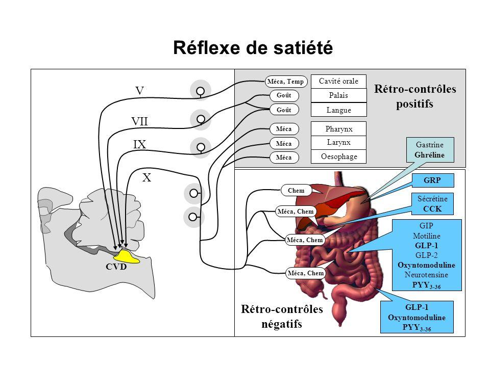 Réflexe de satiété Rétro-contrôles V positifs VII IX X Rétro-contrôles