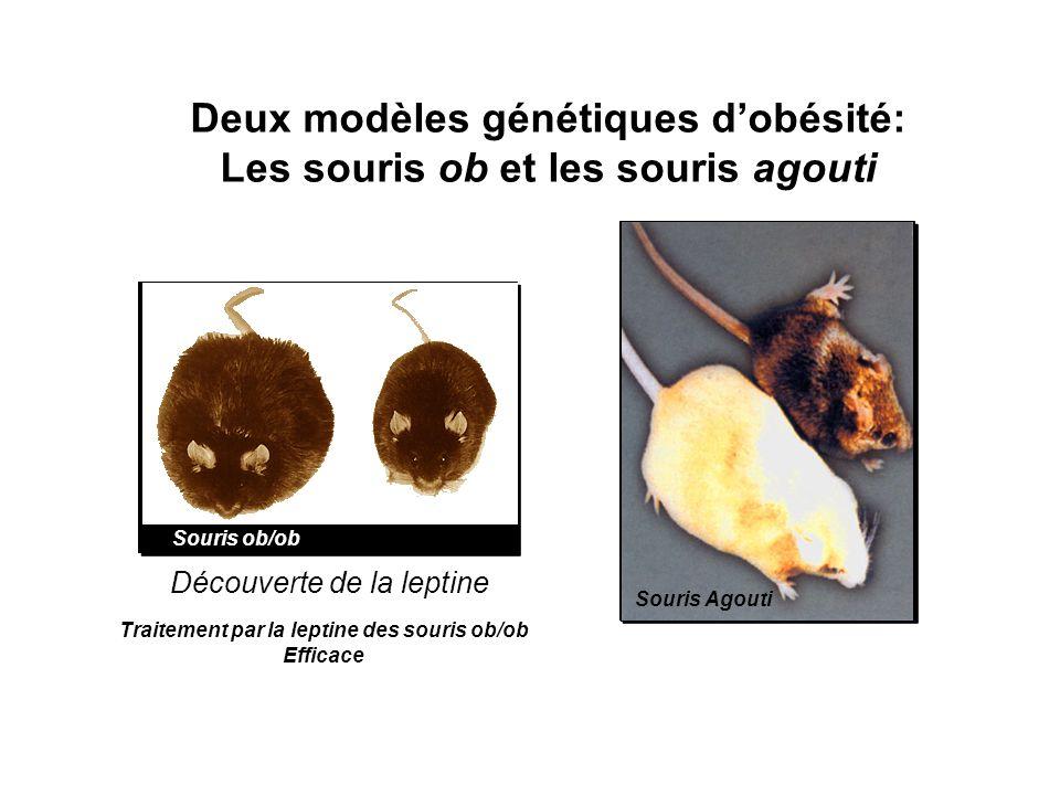 Deux modèles génétiques d'obésité: Les souris ob et les souris agouti