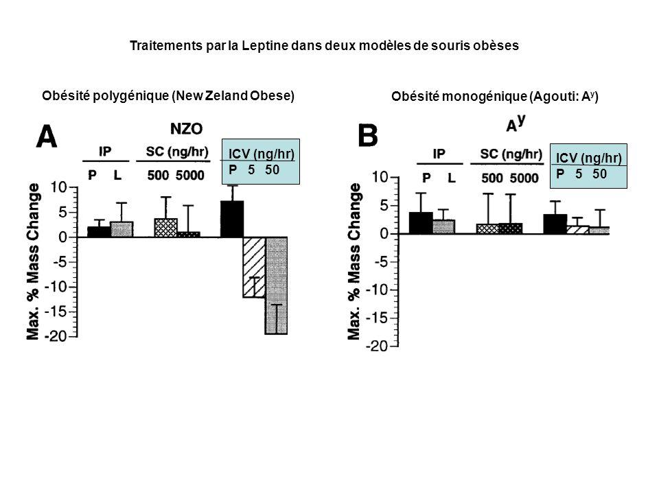 Traitements par la Leptine dans deux modèles de souris obèses