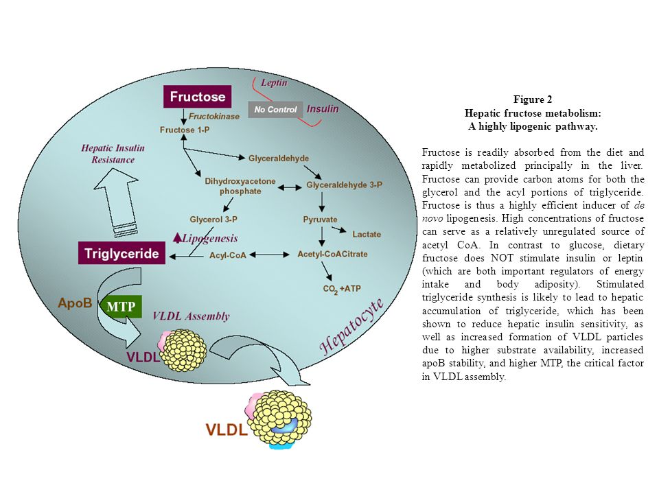 Hepatic fructose metabolism: A highly lipogenic pathway.