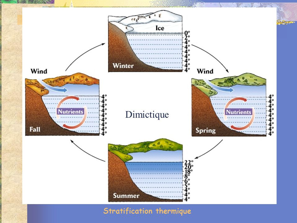 Stratification thermique