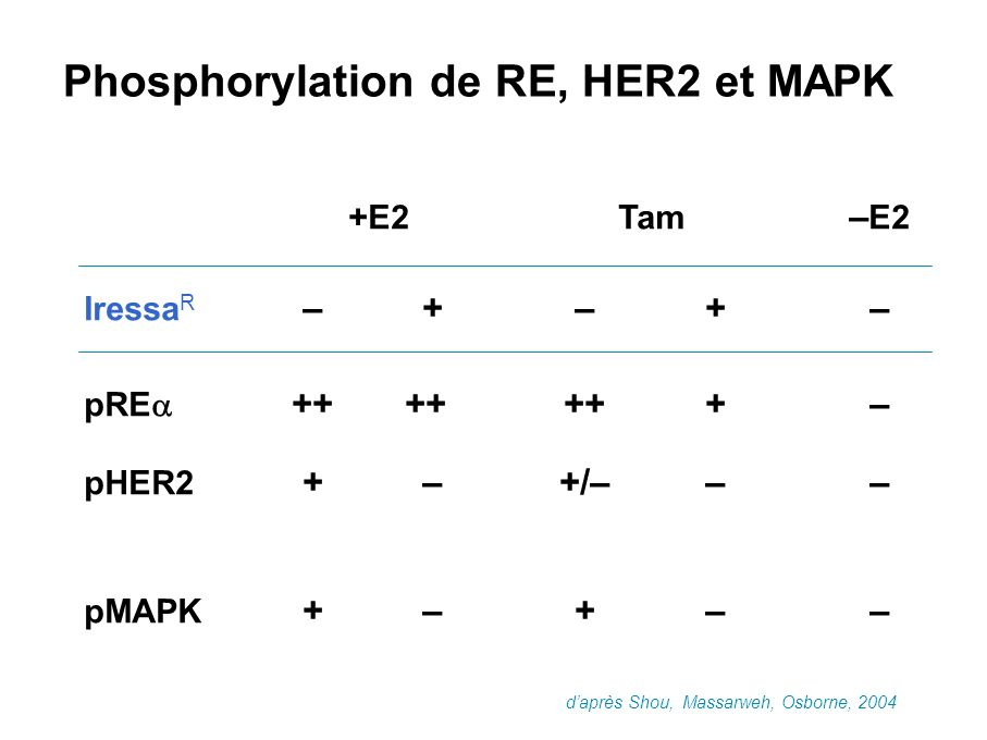 Phosphorylation de RE, HER2 et MAPK