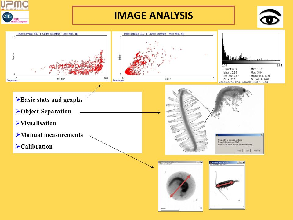 IMAGE ANALYSIS Basic stats and graphs Object Separation Visualisation