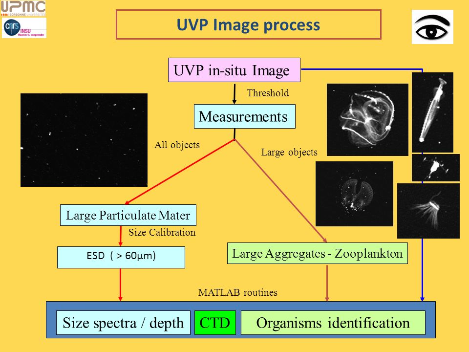 UVP Image process UVP in-situ Image Measurements Size spectra / depth