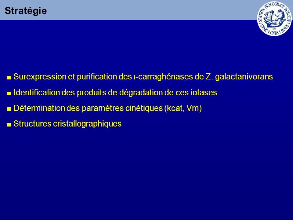 Stratégie ■ Surexpression et purification des ι-carraghénases de Z. galactanivorans. ■ Identification des produits de dégradation de ces iotases.