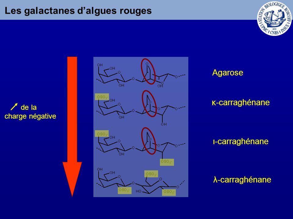 Les galactanes d'algues rouges