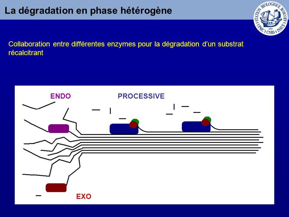 La dégradation en phase hétérogène