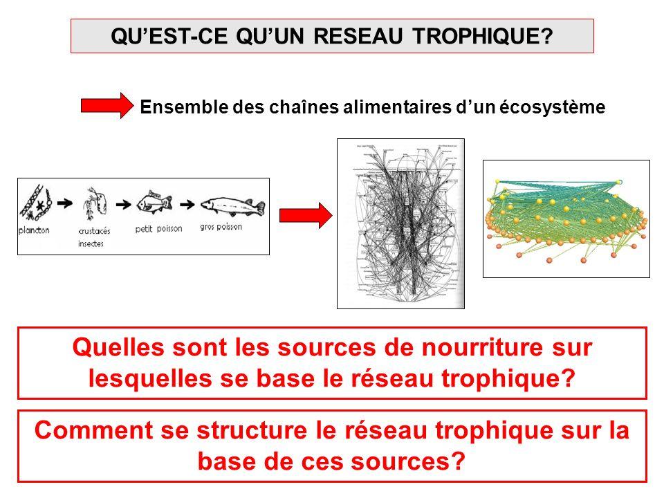 Comment se structure le réseau trophique sur la base de ces sources