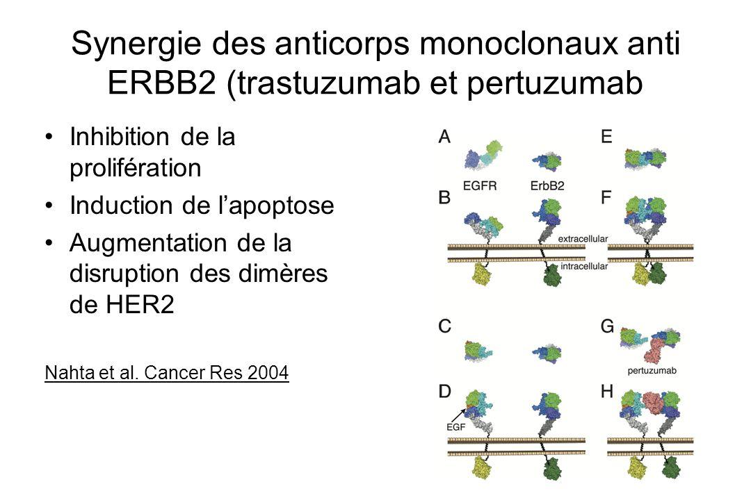 Synergie des anticorps monoclonaux anti ERBB2 (trastuzumab et pertuzumab