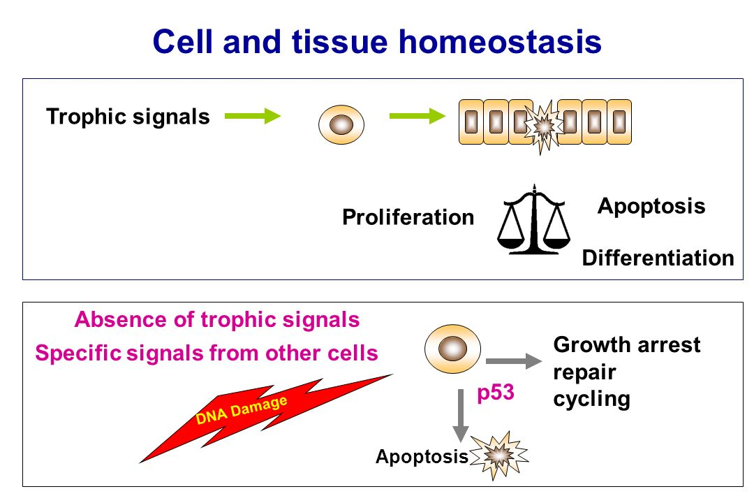 Absence of trophic signals Specific signals from other cells