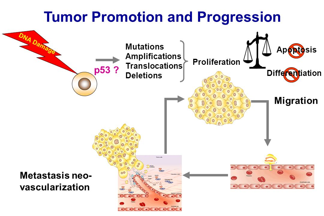 Tumor Promotion and Progression