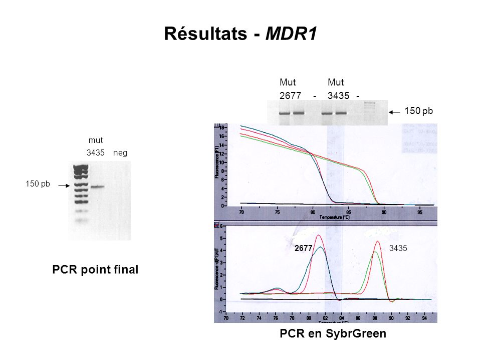 Résultats - MDR1 PCR point final PCR en SybrGreen Mut Mut