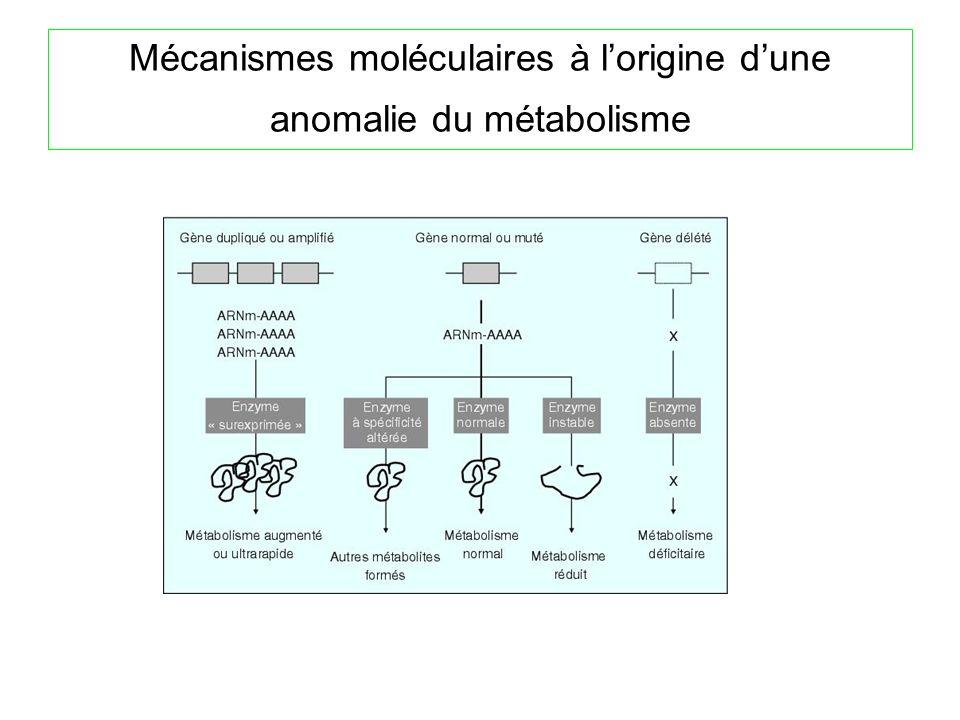 Mécanismes moléculaires à l'origine d'une anomalie du métabolisme
