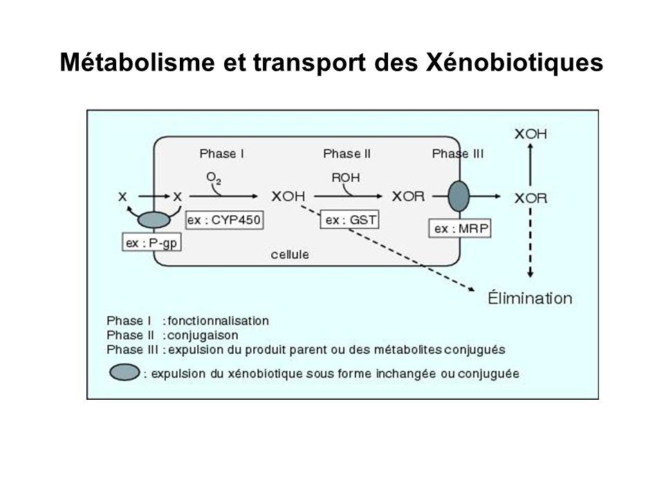 Métabolisme et transport des Xénobiotiques