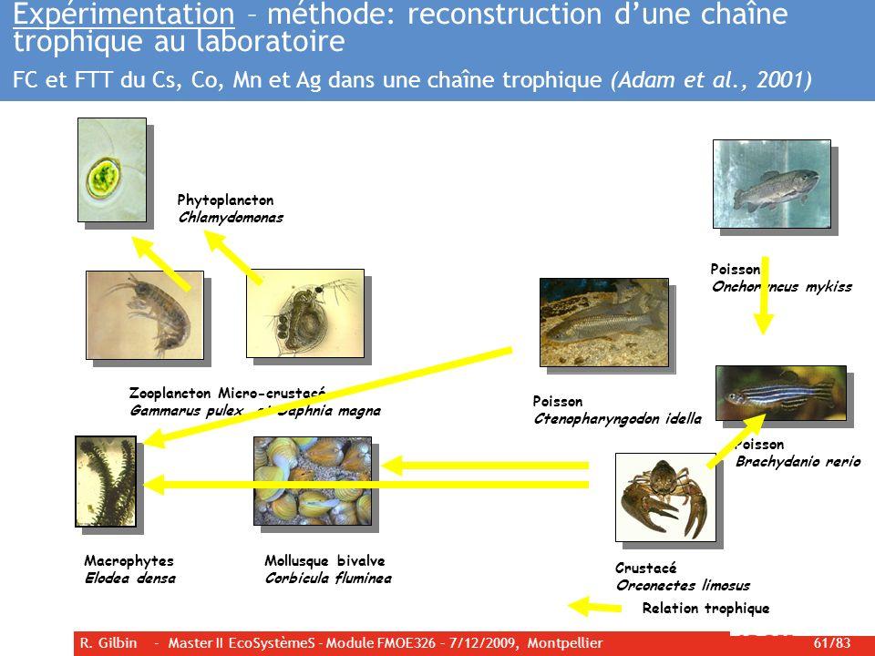 Expérimentation – méthode: reconstruction d'une chaîne trophique au laboratoire FC et FTT du Cs, Co, Mn et Ag dans une chaîne trophique (Adam et al., 2001)