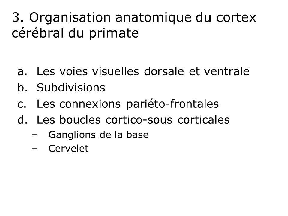 3. Organisation anatomique du cortex cérébral du primate