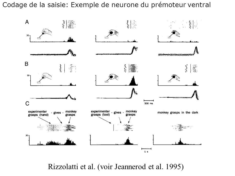 Rizzolatti et al. (voir Jeannerod et al. 1995)