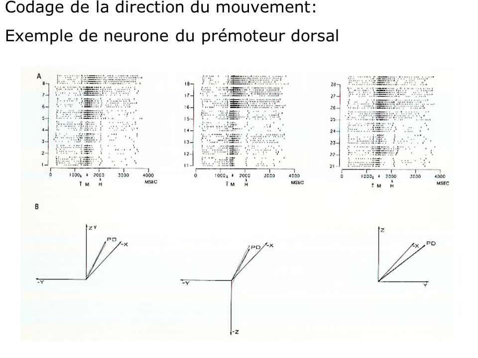 Codage de la direction du mouvement: