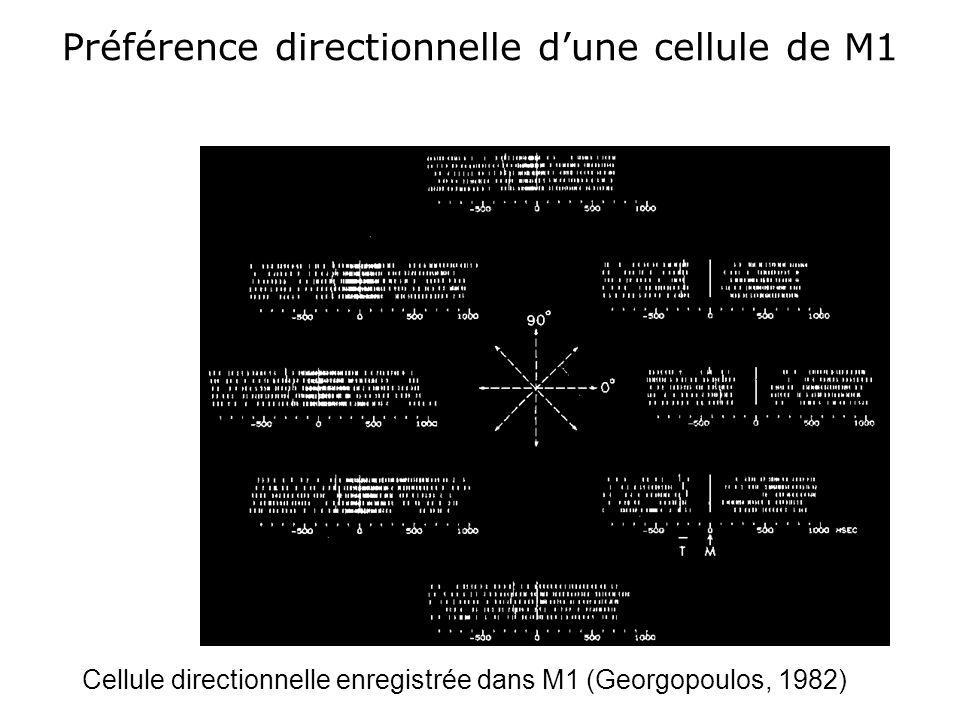 Préférence directionnelle d'une cellule de M1