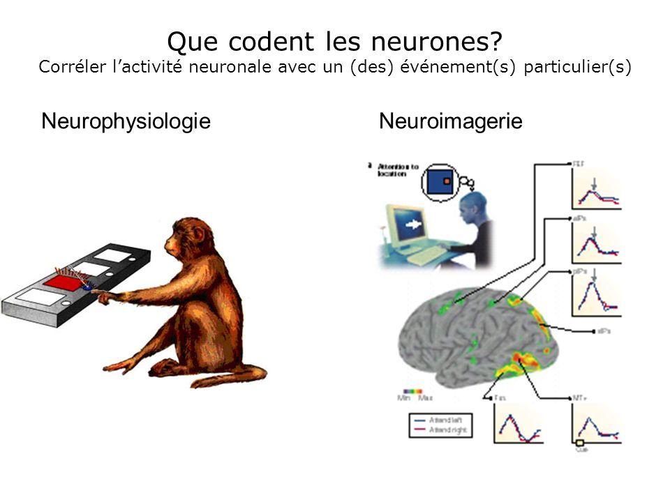 Que codent les neurones