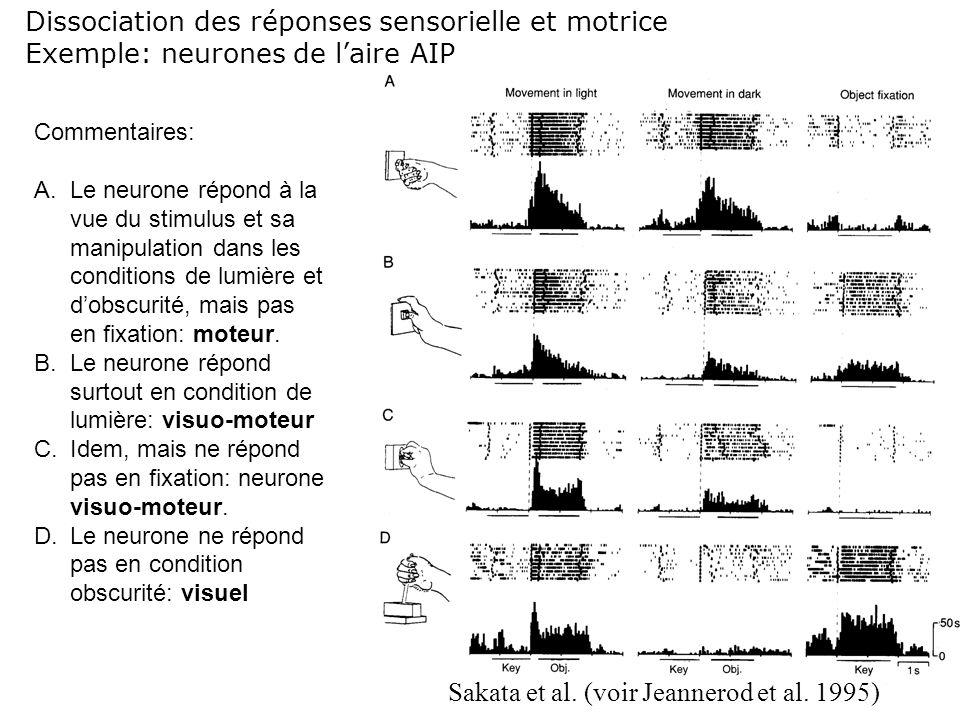 Dissociation des réponses sensorielle et motrice