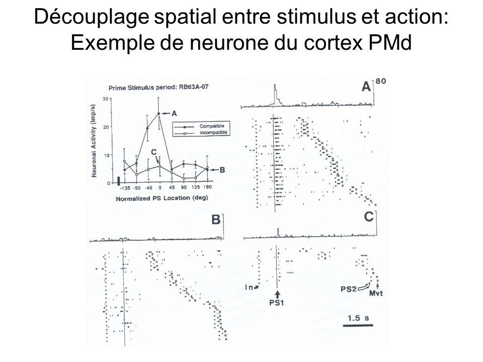 Découplage spatial entre stimulus et action: Exemple de neurone du cortex PMd